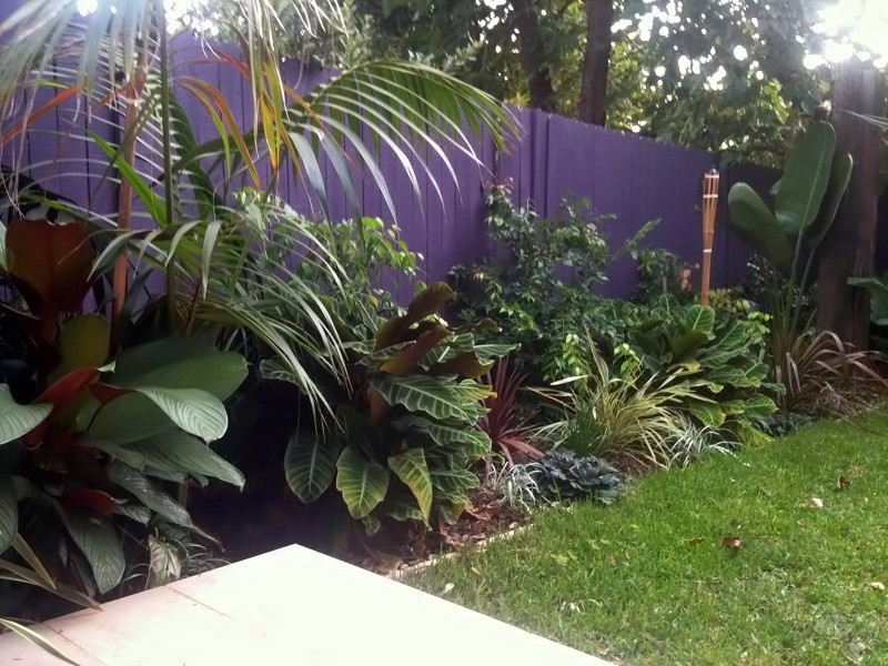 Tropical garden design and construction sydney for Garden designs sydney