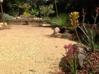 australian native garden landscape after