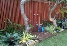 balinese garden design northern beaches sydney