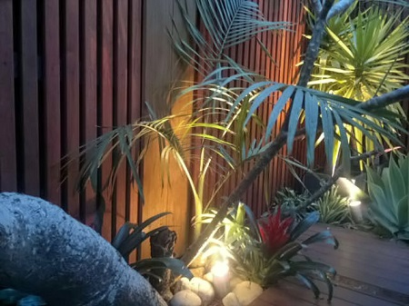 northern beaches tropical garden design