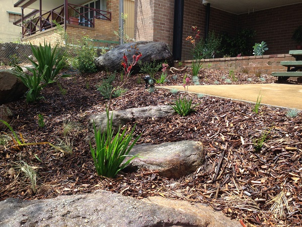 Australian native garden design northern beaches for Australian native garden design ideas