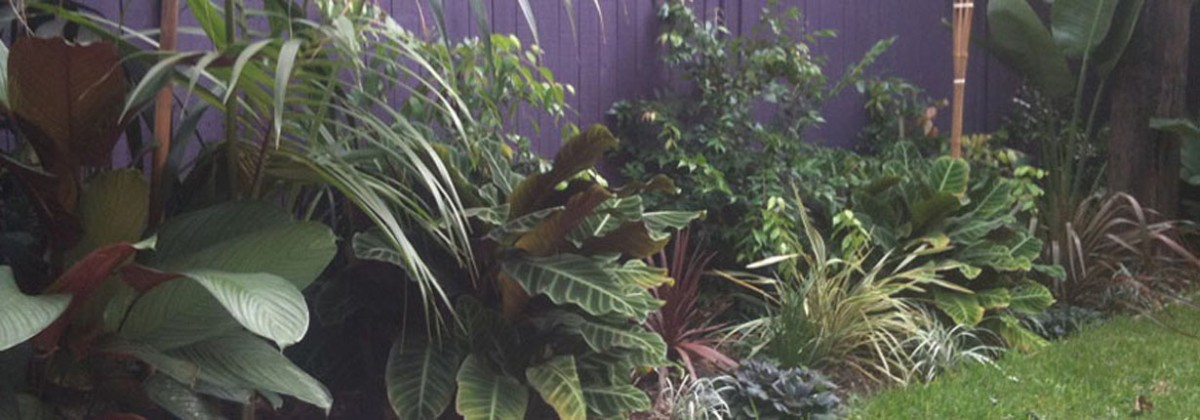 Tropical Garden Design Sydney