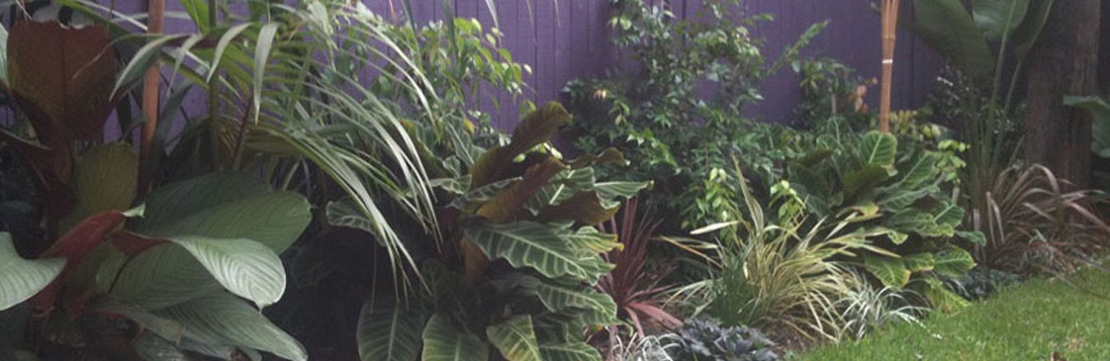 Tropical-Garden-Design-Sydney
