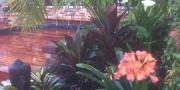courtyard-garden-designer