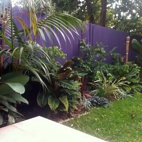 Tropical Balinese Garden Freshwater Sydney