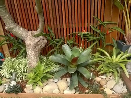 freshwater garden design